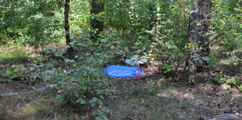 Pierwsze efekty grzybobrania w lasach. Leśnicy apelują o pomoc w sprzątaniu - 54733