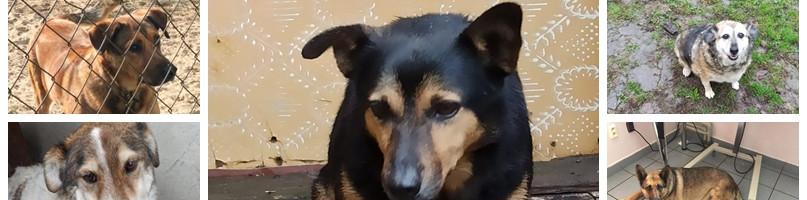 Bezdomne psy z gminy Młodzieszyn szukają swoich rodzin. Urząd zachęca do adopcji-55096