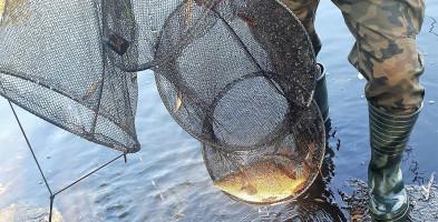 PZW zarybia, mięsiarze wywożą ryby w siatkach. SSR ukarała kolejnych wędkarzy-55136