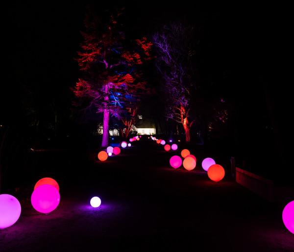 Niedziela w Żelazowej Woli. Park i świąteczne iluminacje czekają-56017