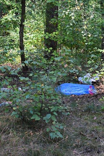 Pierwsze efekty grzybobrania w lasach. Leśnicy apelują o pomoc w sprzątaniu-9599