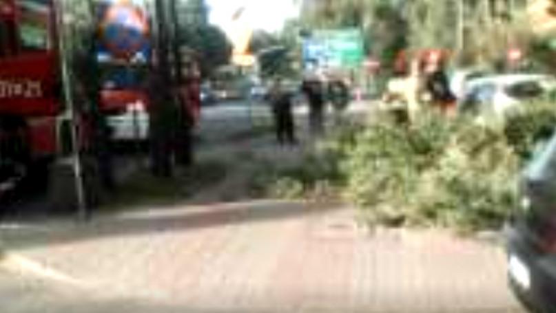 Konar uszkodził dwa samochody