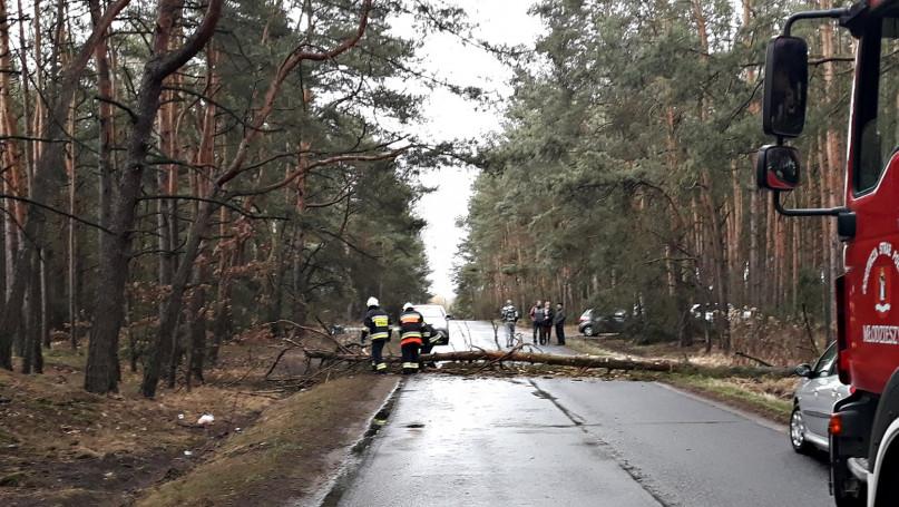 Drzewo zablokowało przejazd. OSP Młodzieszyn w akc